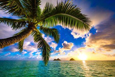 divorce, family, hawaii